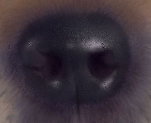 gingernosedetail