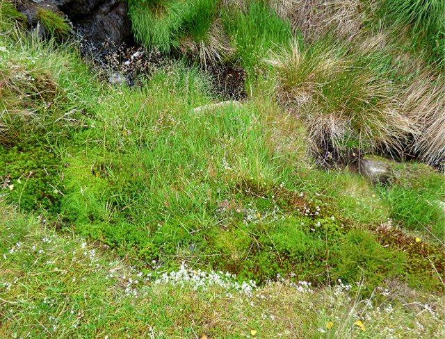 barbrook  merin stone beeley derbyshire ani 040