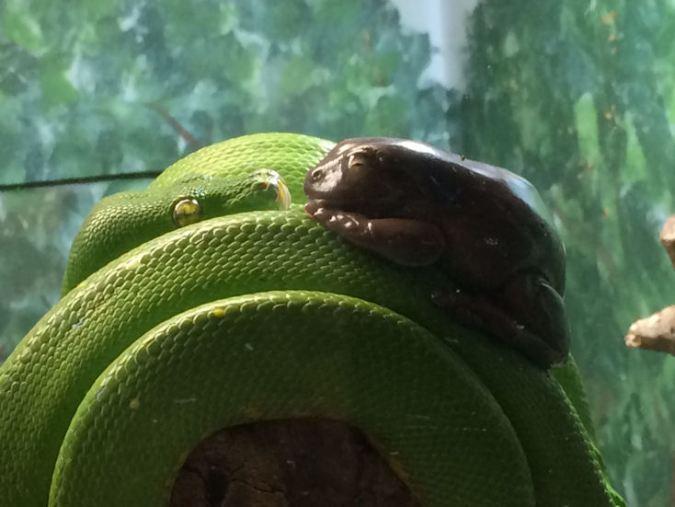 boafrog