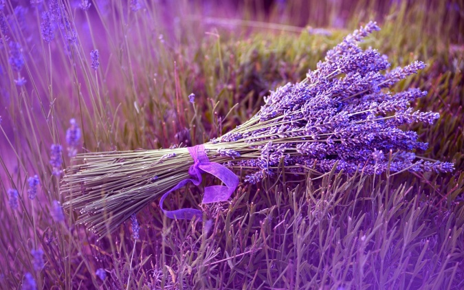 bunch-lavender-2880x1800