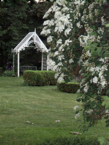 Blog Photo - White garden Bridal Wreath and Arbour