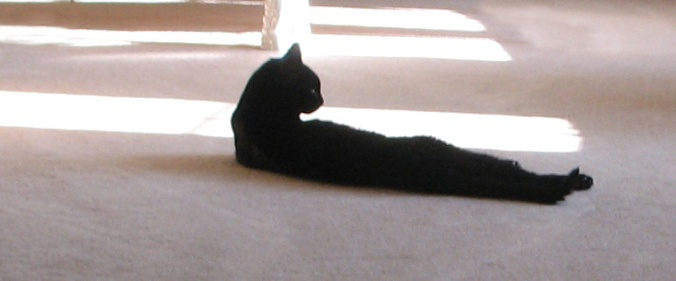 black cat lying in sunlight on carpeted floor with back to camera