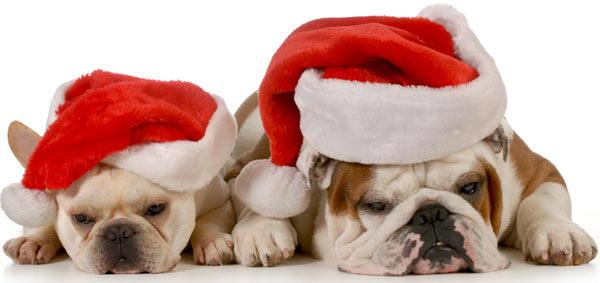 bulk-santa-hats