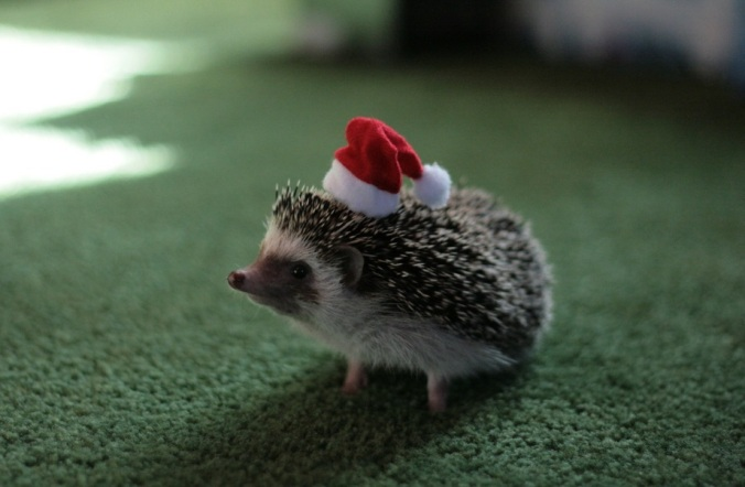 the-world_s-top-10-best-images-of-animals-in-santa-hats-4