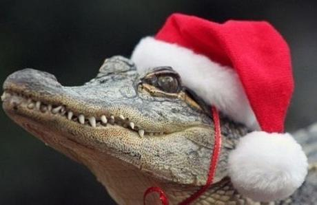 top-10-weird-and-exotic-animals-wearing-santa-l-zxidqc