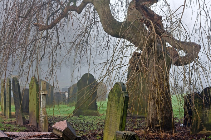 an old cemetery with weathered gravestones and a gnarled twisted tree in the background