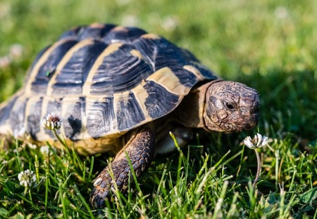 tortoise in grass field